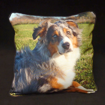 Border Collie Photo Pillow (Upholstery front,  back and Micro-suede cording)